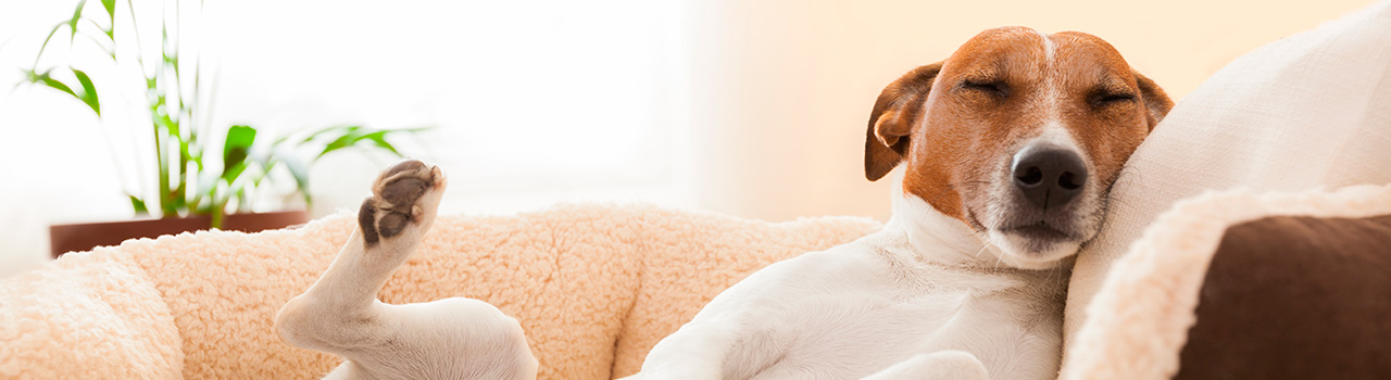 How much do dogs sleep?