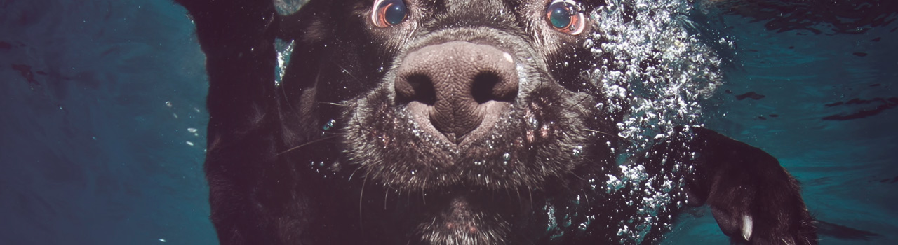 Impresionantes fotos de perros bajo el agua de Seth Casteel