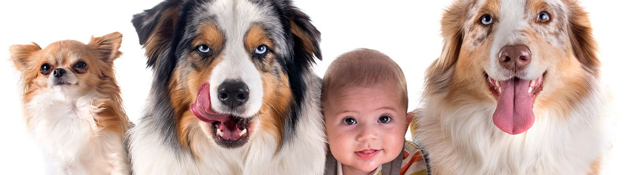How to prepare your dog for your baby's arrival