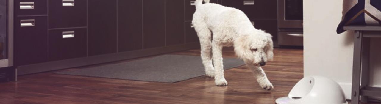 ¿Ansiedad por separación? Tu perro ya no estará solo cuando no estés con él