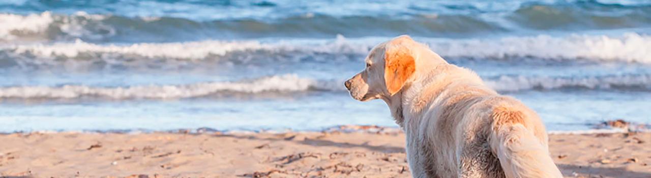 Barcelona contará este verano con una playa canina