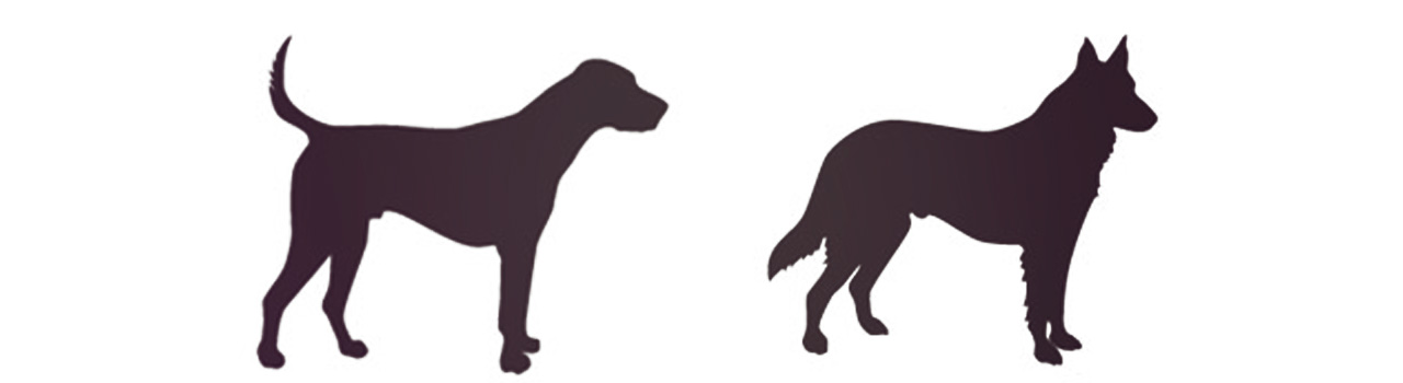 What dogs communicate using their tails
