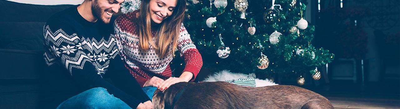 ¿Un perro por Navidad?