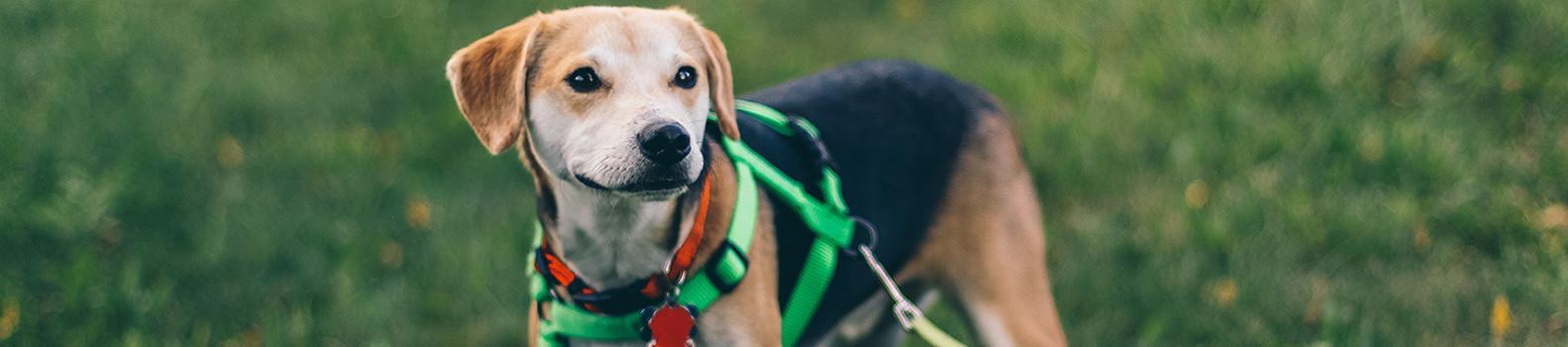 10 Actividades para hacer con tu perro