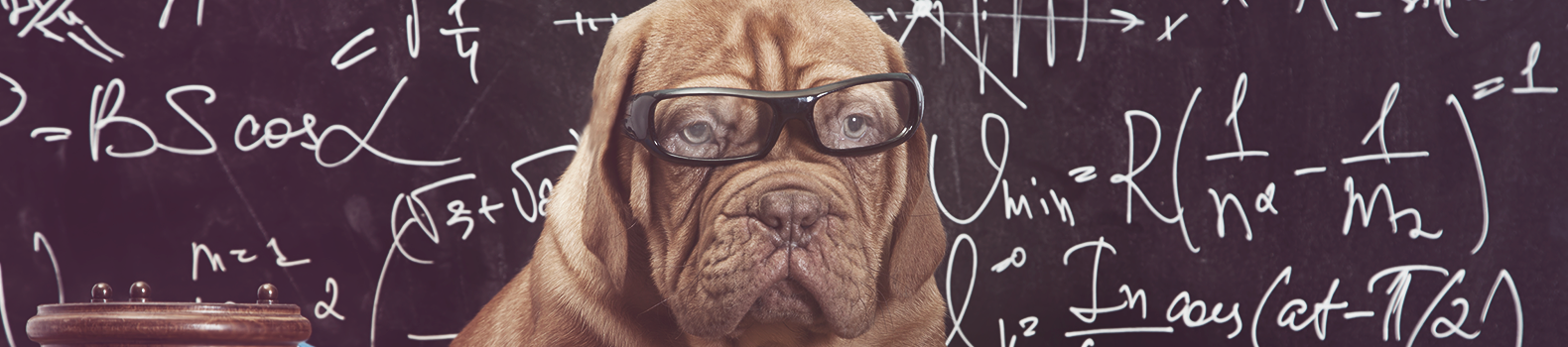 Quiz: Find out how much do you spend on your dog