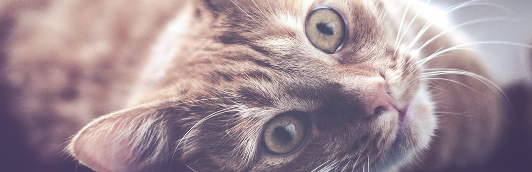 Consejos para el cuidado de los gatos