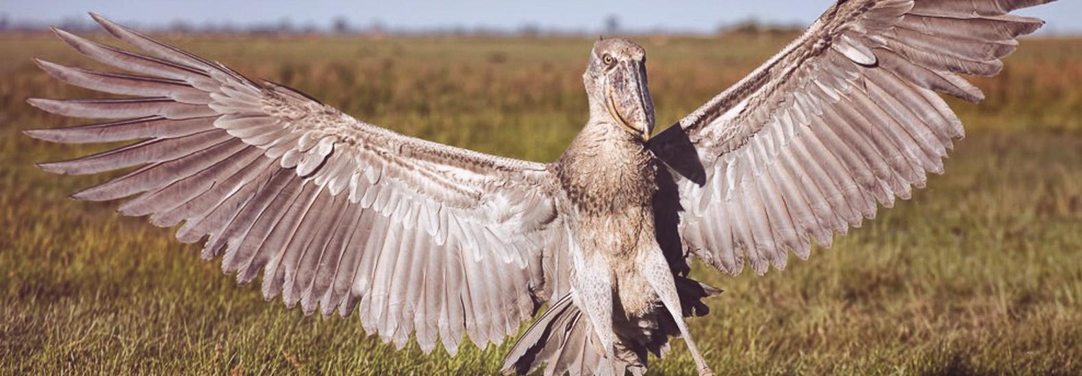 Quiz: ¿Sabrías decir si son verdaderos o falsos estos animales?