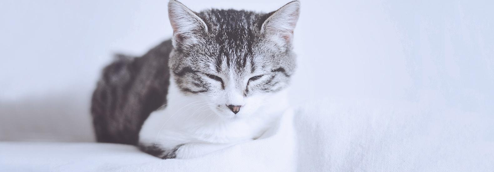 Necesidades básicas del gato