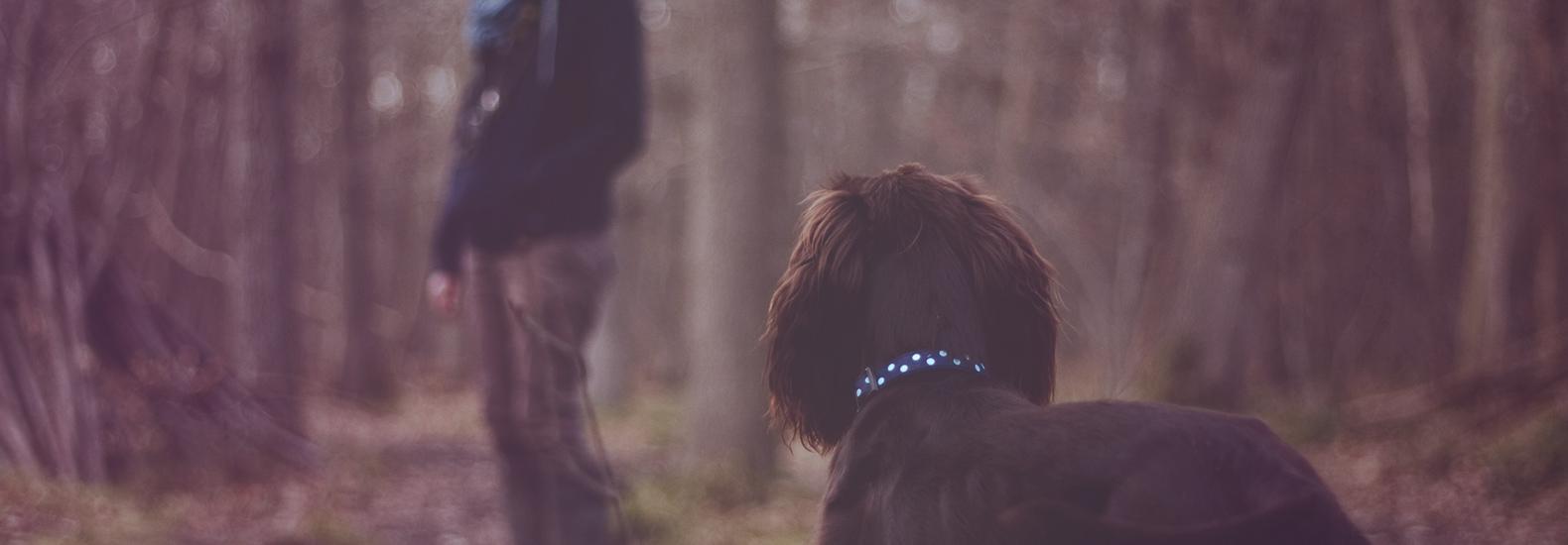 Se disparan los casos de perros robados en parques en España