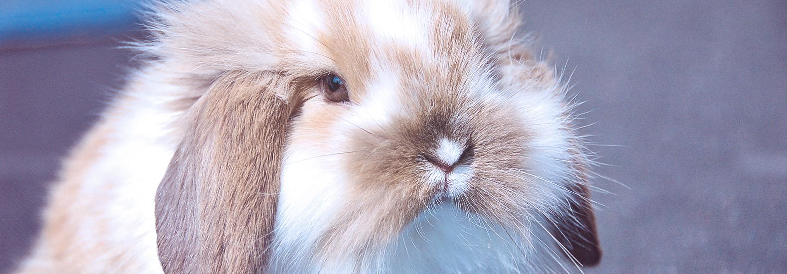 Guía de cuidados básicos de los conejos domésticos