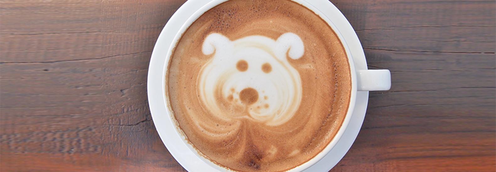 Cafés, perros y gatos