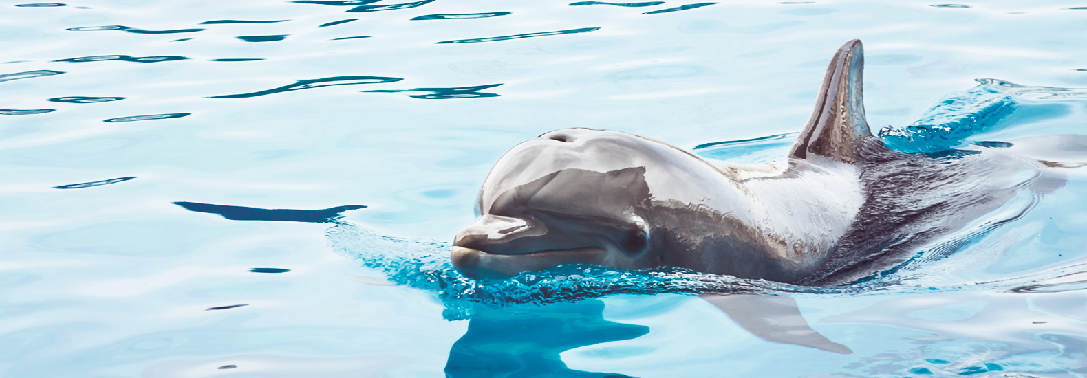 Las terapias asistidas por animales que nos sanan