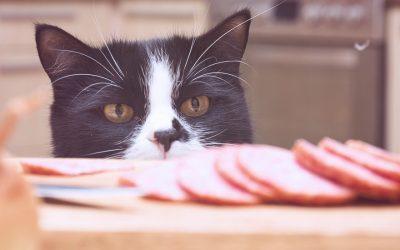 Cómo saber si estás alimentando correctamente a tu gato