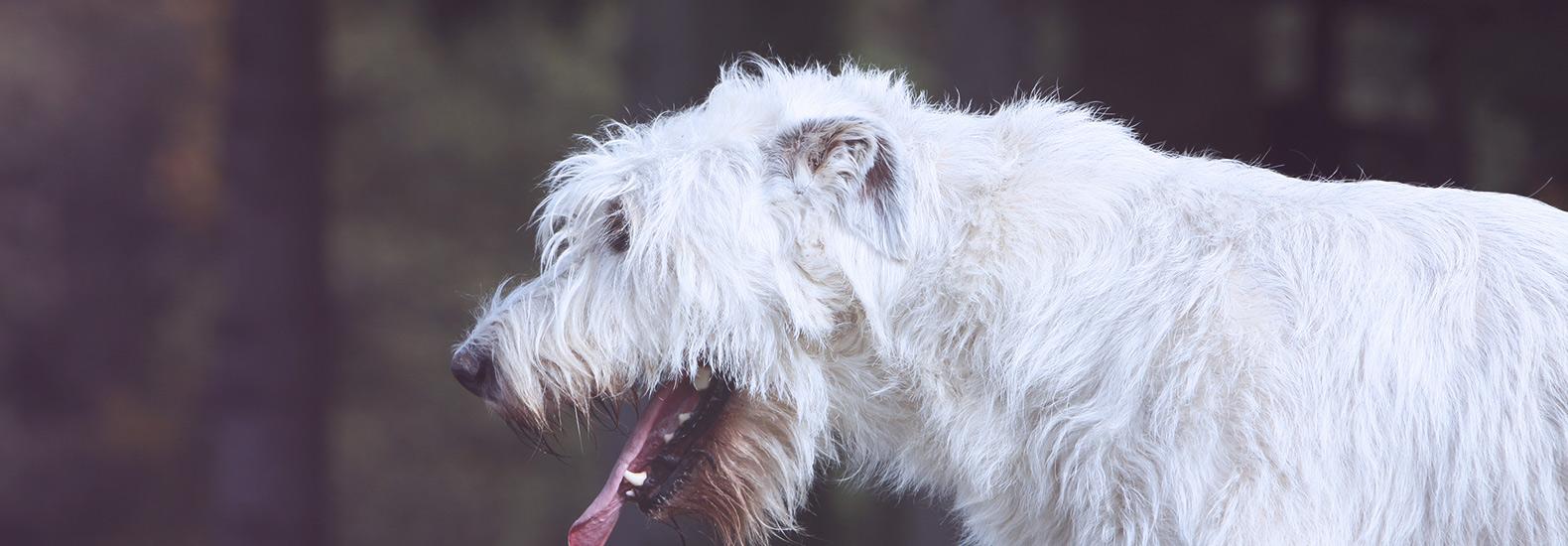 Los peligros del verano para los perros