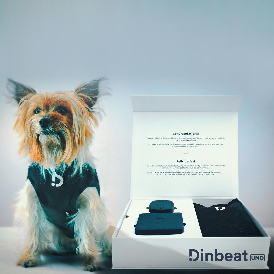 Talía Bonmatí, CEO y Founder de Dinbeat
