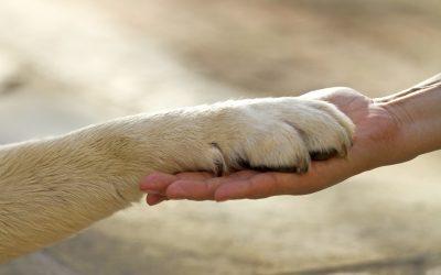 Mascotas y personas mayores, adiós a la soledad