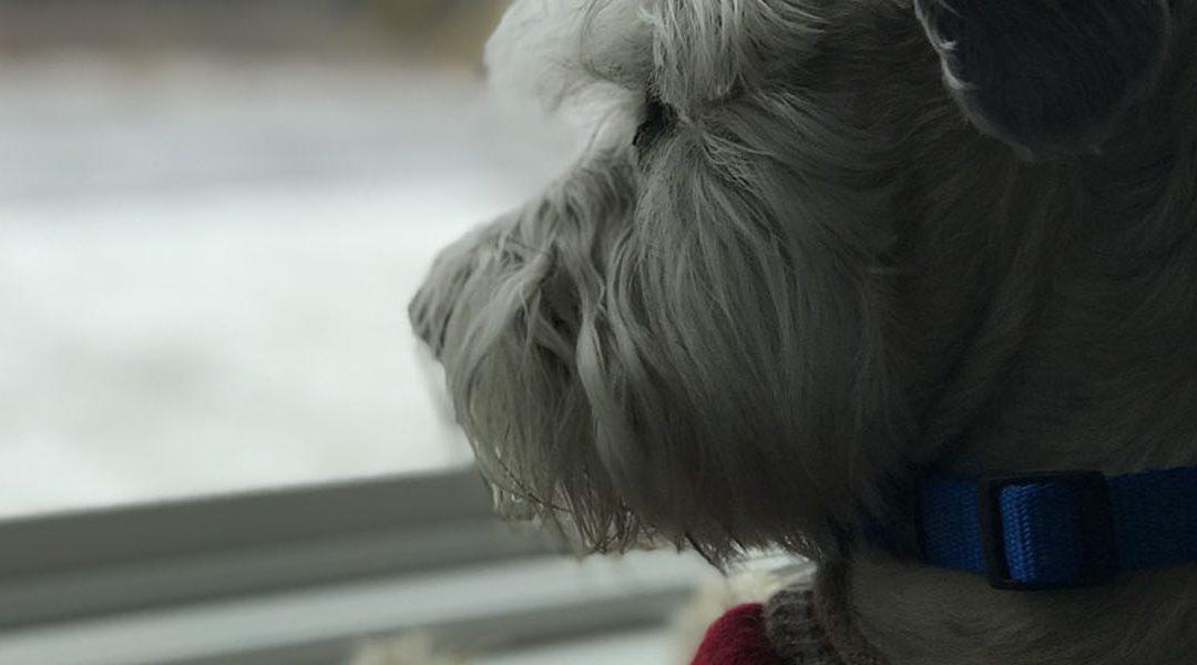 ¿Por qué se asustan los perros con las tormentas?