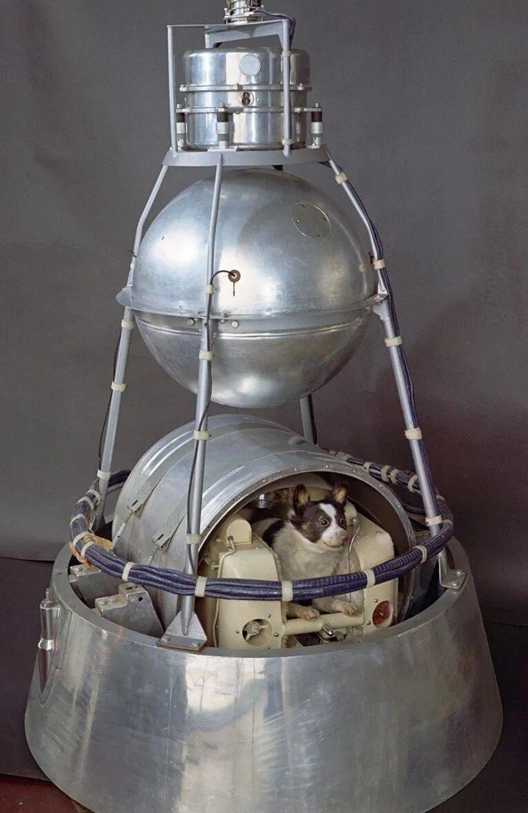 laika en el sputnik
