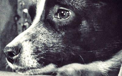 La historia jamás contada de Laika, la perra espacial