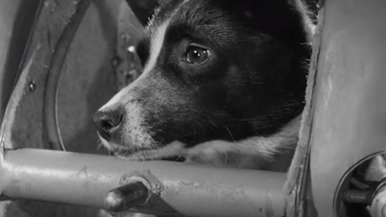 la historia jamás contada de laika la perra astronauta
