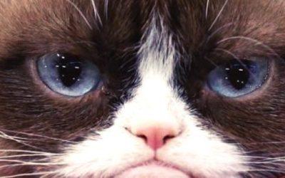 La sorprendente historia de Grumpy Cat, la gata más famosa de internet.