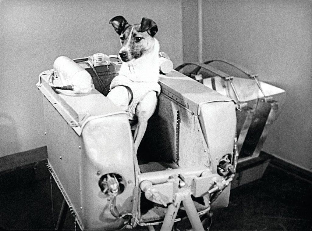 a historia jamás contada de laika la perra astronauta cabina