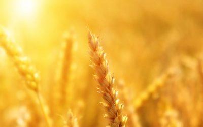 ¿Son los alimentos sin grano tan saludables como creemos?